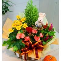誕生日 お祝いにも人気、お祝い、誕生日などに人気のプランツアレンジメント。 鉢植えなのでとっても長持...