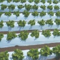 農業用マルチシート オリジナル白黒ストロングマルチ 厚さ0.025mm 幅150cmX長さ200m×3本セット