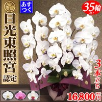 日光東照宮献上品に認定された蘭のフレンズさんです。  「花持ちが凄い」と卸販売先や個人のお客様からの...