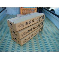 岩国蓮根(れんこん)3kg箱