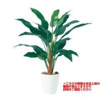 観葉植物 人工 樹木 ストレリチア15 高さ1000mm Sサイズ 鉢:懸崖7号