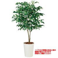観葉植物 人工 樹木 ベンジャミン ワイド FST 高さ1500mm Mサイズ 鉢:懸崖8号