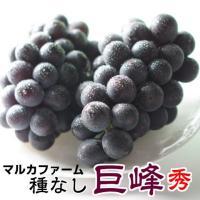 巨峰 茨城県  巨峰予約 ぶどう フルーツ 朝採り 巨峰 秀 約2kg ギフトに最適 ブドウ 種無し 葡萄 ギフト 贈り物 甘い 美味しい お取り寄せ 産地直送