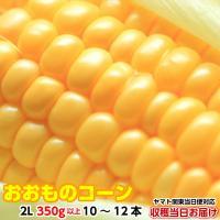 トウモロコシ   お取り寄せ 味来 朝採り とうもろこし 4kg  2L 350g以上 10〜12本 収穫日出荷 即日お届け(離島除く東京+7県) 未来 ギフト お中元 美味しい