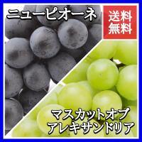 ピオーネ・マスカットセット  岡山県を代表する葡萄の食べ比べセットです。 かのクレオパトラも愛でたと...