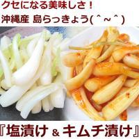 沖縄県産島らっきょうが品薄となっております。  クセになる美味しさ!沖縄県伊江島産島らっきょうの塩漬...