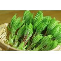 「割引クーポン付」今夜は 天然山菜 コシアブラ三昧 スーパーマーケットに並ぶ栽培品と別物の天然物だけ...