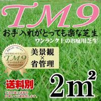 省管理型芝生 TM9 ティーエムナイン サイズ:30cmx37.1cmが9枚=1平米(約0.3坪) ...