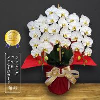 胡蝶蘭キング3本立ち 輪数:36〜40輪以上。(蕾を含む) 生花、ギフトフラワー、鉢花、ラン、胡蝶蘭...