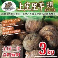 上庄里芋 頭(かしら) 3kg 送料無料 福井県産