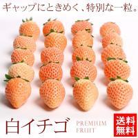 送料無料 フルーツ いちご 茨城県産 白いちご 化粧箱入り 約400g イチゴ ギフト(gc)