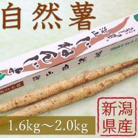 産地直送 新潟県産 令和元年産 おおしま育ち 深山自然薯2本(1.6kg~2.0kg)