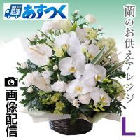 蘭のお花をお入れし、そのとき入荷の新鮮なお花で作成します。  【商品情報】 ・画像はイメージです。蘭...