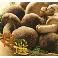 妙義 ナバファーム【特選】 椎茸 (しいたけ)700g|otodoke-shopping