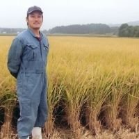 米 山形産はえぬき ステビア有機農法の結晶米 5kg 2018年新米|p-orange|03