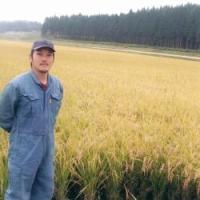 米 山形産はえぬき ステビア有機農法の結晶米 5kg 2018年新米|p-orange|05