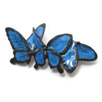 8月5日(金)13:00〜発売商品!!  ヒラヒラヒラ 鮮やかな青を身に纏ったオオルリアゲハが優雅に...