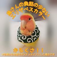 鳥 エリザベスカラー(唐草) 1枚・3サイズ・緑・赤・4g