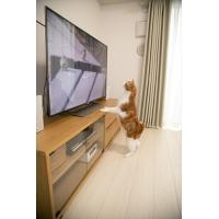 2019.07.11発売 ネコだってテレビがみたい!NEKO TUBE 猫チューブ /  (DVD) IPMD-008-IPM|pigeon-cd|02