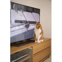 2019.07.11発売 ネコだってテレビがみたい!NEKO TUBE 猫チューブ /  (DVD) IPMD-008-IPM|pigeon-cd|03