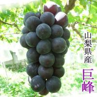 毎年売上ナンバー1の高級品種【巨峰】。ブドウと桃の生産量日本一の山梨県からお届け致します! 「ブドウ...