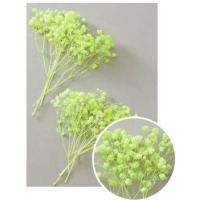 【プリザーブドフラワー・プリザーブド 花材】 1箱 約25g  *自然の生花や植物を原料としています...