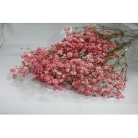 【プリザーブドフラワー・プリザーブド 花材】 存在感のある大きな花粒が特徴です。 1束(約15g) ...