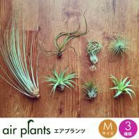 お部屋に癒しのグリーンを。空気中の水分で育つ不思議な植物「エアプランツ」土もいらないので、お手入れも...