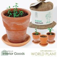 【WORLD PLANT】世界の植物 栽培キット<br> 4種類から選べる!<br...