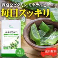 キダチアロエは、日本でおなじみの一番有名なアロエです。 昔から、日本ではキダチアロエを薬用として重用...