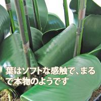 光触媒 胡蝶蘭 造花 7本立て ホワイト 高級和紙・ダブルボー型リボンラッピング スタイリッシュ花器 送料無料