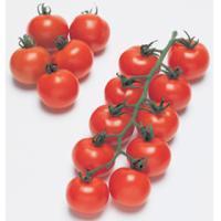 中玉トマトの種 フルティカ 100粒