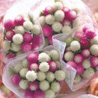 オードリー系の3種(ピンクインプ、ホワイト、パープルレッド)とバイカラーローズの4色ミックス。 【オ...