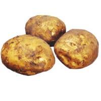 じゃがいも(馬鈴薯) 出島 種芋 種いも 2kg入り(予約販売)春 秋植え