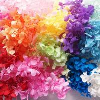 アジサイの花を特殊な液につけて乾燥させたプリザーブドフラワーです。ハーバリウムオイルにつけても色抜け...