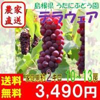 ●商品情報 種無し葡萄の定番。小粒でも荷重が豊富で甘みが強く、程よい酸味を持ち合わせています。 ●名...