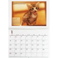 可愛い猫の写真を使った、リング式カレンダーです。 毎月可愛いニャンコが楽しめます。  サイズ:見開き...