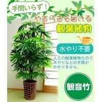 お手軽観葉植物(人工観葉植物) 観音竹