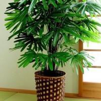お手軽観葉植物(人工観葉植物) 観音竹/手間いらず!!安らぎを届ける観葉植物。/置物・掛け時計