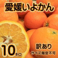全国生産量No.1を誇るここ愛媛県よりせいぶ青果が販売する「愛媛いよかん」は非常に香りがよく、ジュー...