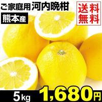 商品情報 「ジューシーオレンジ」「夏文旦」とも称されるみずみずしい柑橘・河内晩柑。グレープフルーツの...