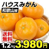 商品情報     果樹王国・和歌山より、夏に食する贅沢なひと品、甘くてみずみずしいハウス温州みかんを...
