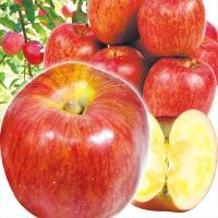 商品情報      ふじより早い時期から食べられるとっておき蜜入り赤りんご! センサー選果によって選...