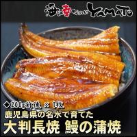 土用丑の日 (うなぎ ウナギ) 鰻の蒲焼 鹿児島県産 大判200g前後 ×1枚 お中元