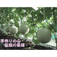 訳あり 送料無料 静岡産 温室マスクメロン アローマ印 2玉入 約1.3kg×2玉
