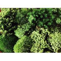 天然苔おまかせ5~7種詰合せ