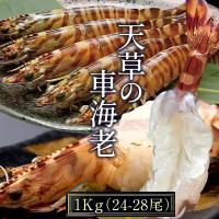 車海老 活【大L】天草 車えび 1kg 熊本県産 獲れたて 生き活き 養殖場直送 送料無料