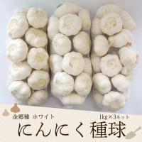 にんにく種球 1kg 3ネット 中国産 上海嘉定種(ホワイト)  【品名】中国産 にんにく種球 ホー...