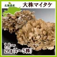 きのこ生産量北海道一を誇る、きのこの里・愛別町から、芳醇な香りと、歯ごたえが特徴の、大株マイタケをお...