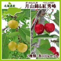 【7月下旬から発送を開始します】 黄色いさくらんぼ月山錦(がっさんにしき)は、中国から導入した品種で...